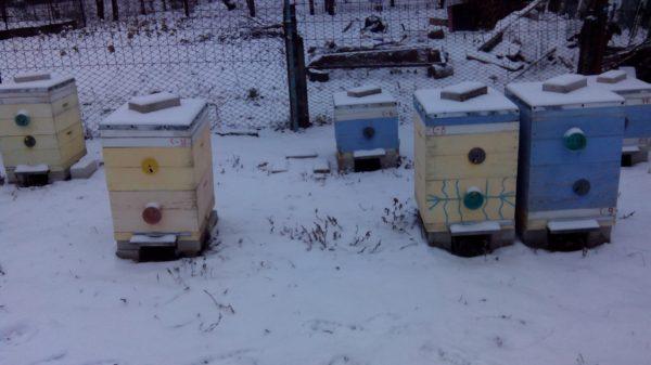 Проверил как зимуют пчелки