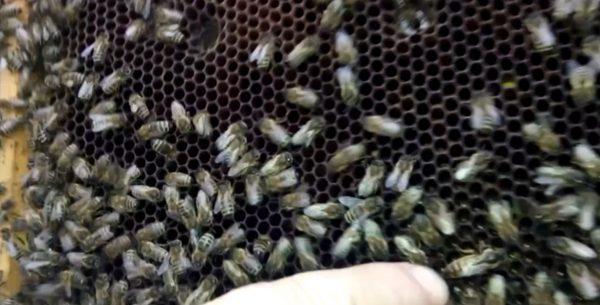 Привез пчел. Делал профилктику от болезней