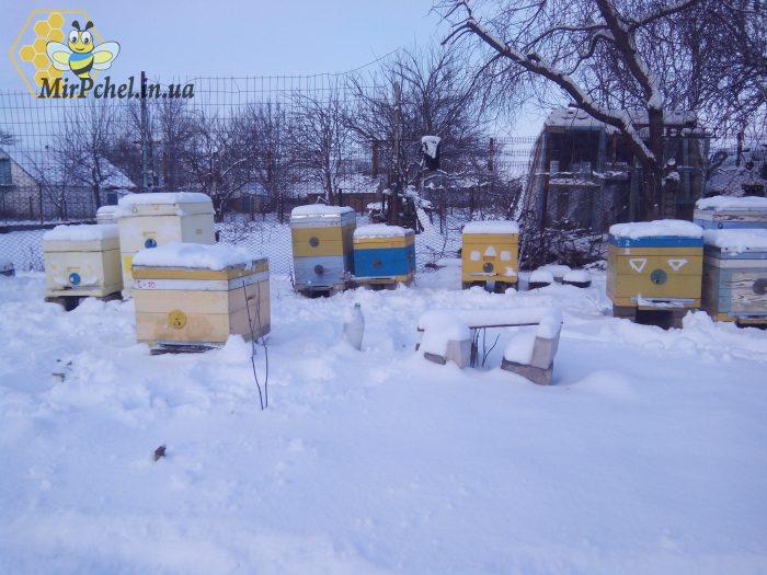 Зимовка пчел 2018 год. Зимовка в 1 корпусе рута