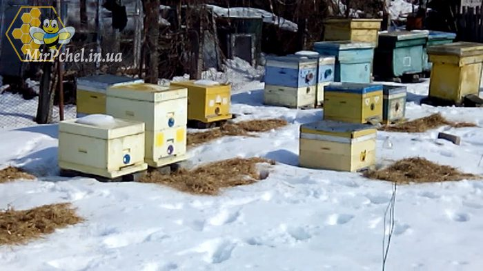 Весенний облет пчел 10.03.2018