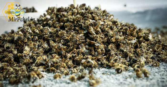 Потрава пчел в Белоцерковском районе. И обращение головы общества пасечников к пасечникам Украины