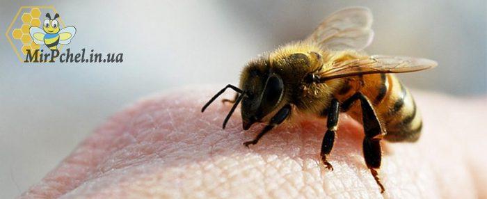 Апитерапия: лечение пчелиным ядом