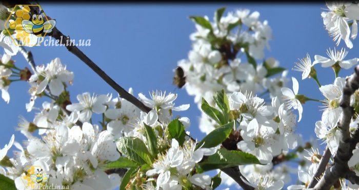 Вот и весна.
