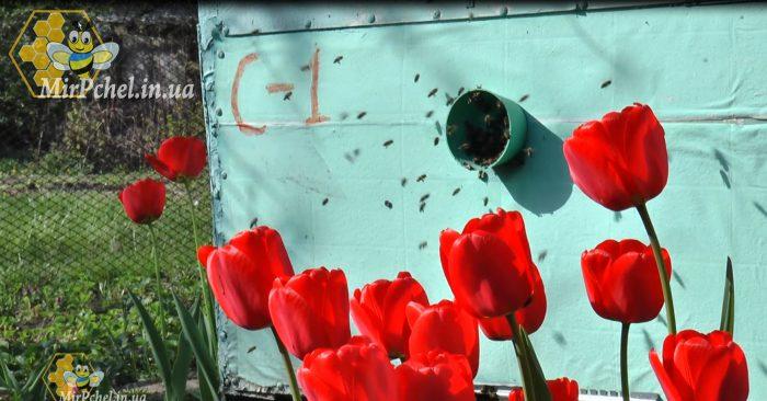 Сегодня,  20 мая,  отмечается Всемирный день пчел.