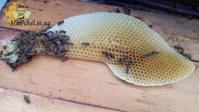Качка меда и результаты на стационарной пасеке