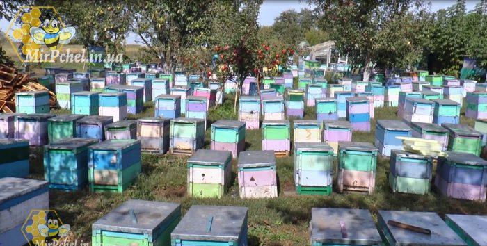 Масовая гибель пчел в Киевской обл